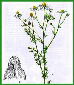 La bibliothèque de l'herboristerie Camomille2